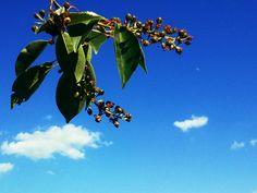 sky, twig