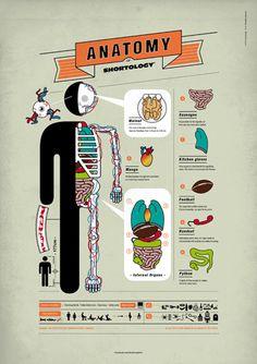 Anatomy Shortology Poster