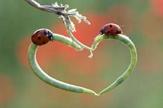 heart shapes in nature   Mother Nature Provides A Romantic Heart Shaped Perch For These Two ...