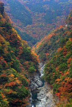 Autumn at Iya Valley | Japan (by Tomobil)