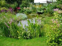 Aquaponic Pond Garden Designs Small or large, a water fountain adds interest to . Aquaponic Pond G Backyard Water Feature, Ponds Backyard, Garden Ponds, Backyard Ideas, Pond Landscaping, Landscaping With Rocks, Water Plants, Water Garden, Bog Plants