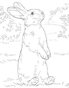White rabbit standing on hind legs Coloring page