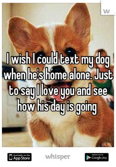 @Amanda Snelson Snelson Snelson Joyce this is something we would both do! #furbabymamas