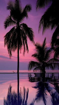 Check out this awesome collection of Palm Trees wallpapers, with 45 Palm Trees wallpaper pictures for your desktop, phone or tablet. Tree Wallpaper Iphone, Sunset Wallpaper, Nature Wallpaper, 1080p Wallpaper, Trendy Wallpaper, Wallpaper Pictures, Nature Pictures, Cool Pictures, Beautiful Pictures