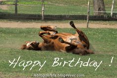 happy horse happy birthday