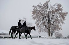A snowy day at Woodbine Racetrack