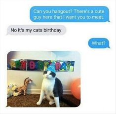 I will do this for my cat