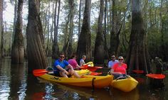 Cypress-Tupelo Swamp Kayak Tour - Picture of Gravity Trails Guided Tours of New Orleans New Orleans Swamp Tour, Cypress Swamp, Pearl River, Kayak Tours, Trail Guide, 5 Hours, Tour Guide, Kayaking, Wildlife