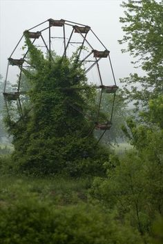 overgrown ferris wheel