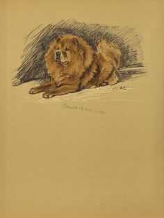 CHOW CHOW 1930s Antique Dog Print Wall Decor Art by HucksterHaven, $15.00