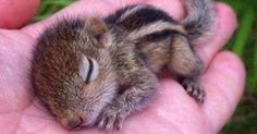 This baby squirrel is just too cute! http://ift.tt/2gu2fJM