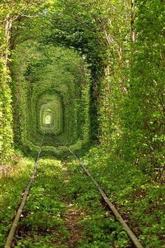 tree train tunnel
