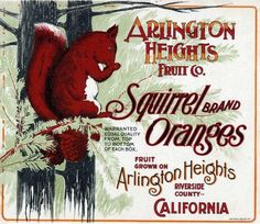 Riverside Squirrel Red and Green Orange Citrus Fruit Crate Label Advertising Art Print