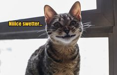 Niiice swetter... http://chzb.gr/1yatcWC