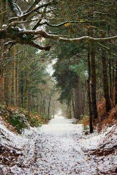 Delamere forest