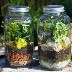 Make your own terrarium with a collection of compatible plants featuring indoor foliage for a natural woodland scene or a beach cottage design.
