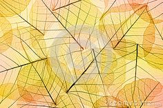 Colors of Autumn - Transparent  Leaves Background