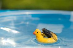 Minor Paddle by ukaaa, via Flickr. These fly photos kill me!