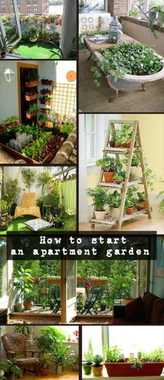 Read directions about how to start an apartment garden.