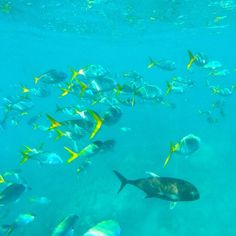 Under the sea!! Great Barrier Reef Australia.  #greatbarrierreef #qld #australia #fish #scuba #snorkeling #travel #instatravel #wanderlust #diving #gopro by rosario_traveling.artist http://ift.tt/1UokkV2