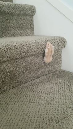 Theodore, the hamster, climbs up the stairs - Niedliche tiere - # - Animals - tierbabys Cute Little Animals, Cute Funny Animals, Funny Cute, Cute Cats, Adorable Kittens, Funny Birds, Cute Wild Animals, Cute Animal Videos, Cute Animal Pictures