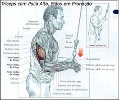 #triceps #musculação #fitness