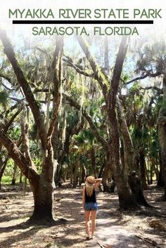 Florida's Myakka River State Park is an awesome place to kayak, bike, bird watch, hike, or, if you're real adventurous take a walk on their Canopy Walkway and Tower, which soars 74 feet into the air giving you 365 degree views of the entire park!