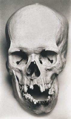 Human skull by Irving Penn Skull Reference, Anatomy Reference, Dragon Oriental, Totenkopf Tattoos, Anatomy Drawing, Skull Design, Skull Tattoos, Skull And Bones, Memento Mori