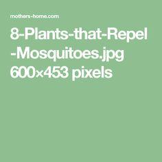 8-Plants-that-Repel-Mosquitoes.jpg 600×453 pixels