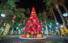 Soulpics Photography, Shane Glen: Árvore de Natal em Socorro, a cidade é decorada com enfeites feitos de garrafa PET