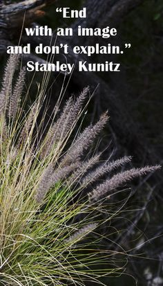 """End with an image and don't explain.""  Stanley Kunitz -- Explore insightful quotations, both ancient and modern, on the creative process at http://www.examiner.com/article/forty-quotations-for-writing-inspiration"