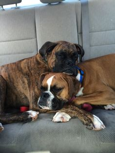 Chewy with his girl friend Rocco.