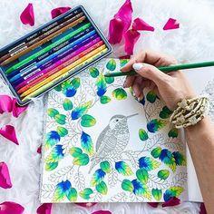 Bom diaaaa... Que sua Terça-Feira seja abençoada!!! Foto linda por @namsilat , livro Reino Animal ...... Envie seu colorido também #jardimsecretolove ...... #jardimsecreto #arte #lapisdecor #terapiaantiestres #coloringbookforadults #amandocolorir #secretgarden #florestaencantada #esrarengizbahçe #gizemliorman  #paletadascores #antiestresse #canetinhas #video #tutorial #dicas #façafacil #testando #coloringbook #livrodecolorirparaadulto #editorasextante #johannabasford #florida #flores…