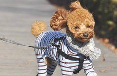 16 Chic Dogs Giving Better Face Than Derek Zoolander