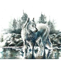 Beautiful #watercolor #illustration by @_angelina_lg_ (IG) of a white #wolf in a…