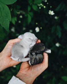 Mini Lop, Feel Good, Bunny, Photo And Video, Cute, Instagram, Rabbit, Videos, Board