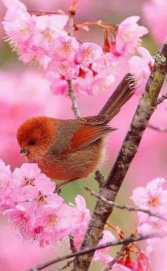 Pet bird photography sweets New ideas All Birds, Cute Birds, Pretty Birds, Little Birds, Most Beautiful Birds, Beautiful Gif, Beautiful Flowers, Exotic Birds, Colorful Birds