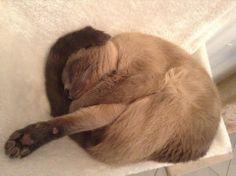 cat knot