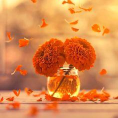 Marigold days by Ashraful Arefin - Photo 159681369 / 500px