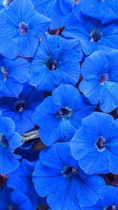 Kind Of Blue, Love Blue, Blue And White, Color Blue, Spring Flowers, Blue Flowers, Beautiful Flowers, Beautiful Pictures, Floral Wallpaper Iphone
