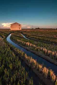 """La Albufera, arrozales y surcos (La Albufera Lagoon, Rice fields [for paella!] & Furrows)"" by José Manuel Hermoso 