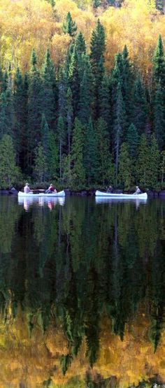 Canoeing. Did you know the BWCA is one of Minnesota's natural treasures? One of the best!