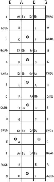 Notes on the bass fingerboard. Notes on the bass fingerboard. Bass Guitar Notes, Bass Guitar Chords, Bass Guitar Straps, Bass Guitar Lessons, Guitar Chord Chart, Guitar Lessons For Beginners, Guitar Scales, Music Chords, Acoustic Guitar