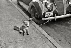 Ford Fox    October 1940. Moorhead, Minnesota.