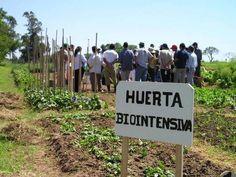 Agricultura biointensiva: El cultivo de alimentos sanos - ABC Color