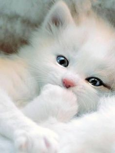 Aaawww, this kitty is so cute!