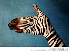 zebra hand