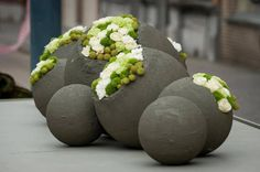Beautifully planted garden spheres