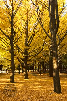 Yoyogi Park (Tokyo) in the Fall