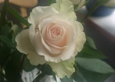 rose Rose, Flowers, Plants, Pink, Roses, Flora, Royal Icing Flowers, Floral, Plant
